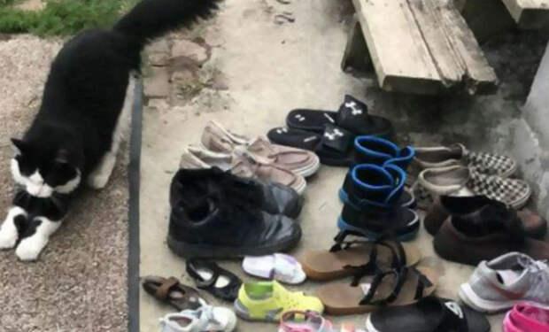 Мужчина решил убраться за сараем и нашел 50 пар чужой обуви. Начал наблюдать за местом и увидел, как обувь приносит кот