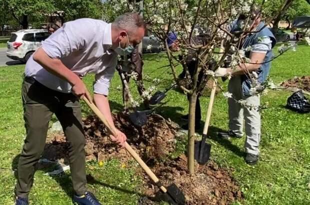 Евгений Попов: На Мичуринском проспекте высадили более 100 яблонь