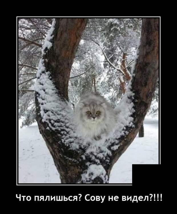 Демотиватор про сову