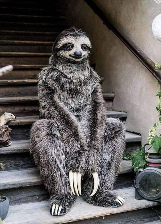 Ленивец сидит на лестнице