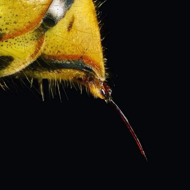 Датчанин показывает через микроскоп всех существ, которые живут с нами рядом