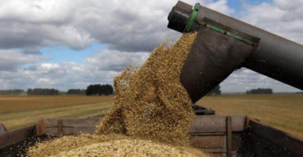 Экспортная пошлина на пшеницу с 23 июня вырастет до $38,1 за тонну