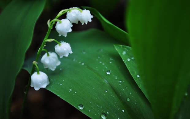 ТОП-10 самых смертоносных организмов на вашем заднем дворе