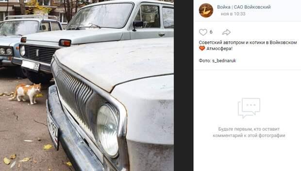 Фото дня: Войковский кот среди советских машин