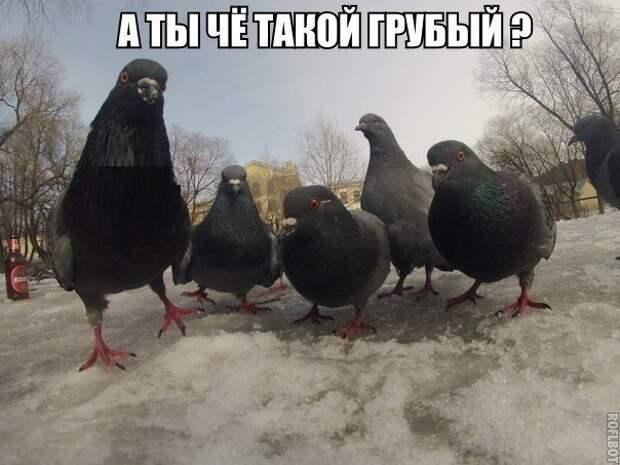1453387488_memy-s-zhivotnymi-6