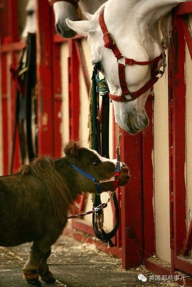 Дюжина самых умильных пони в мире