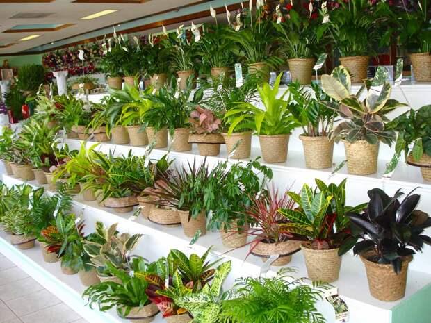 Идеальное домашнее растение для каждого места в доме