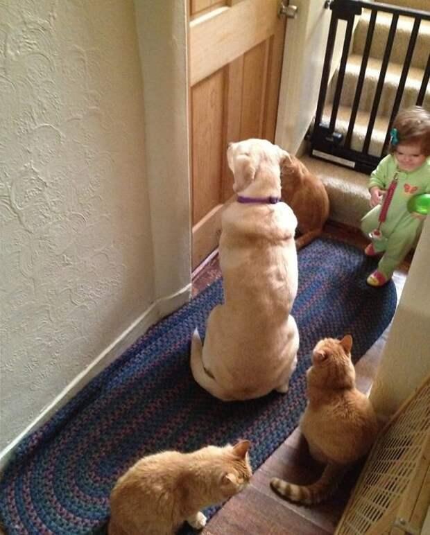 5. Когда мама решила побыть в одиночестве животные, жизнь, кот, питомец, семья, собака, фото
