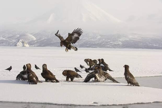 Зимняя Камчатка: купание в горячих источниках, бои орланов и созерцание бескрайних просторов