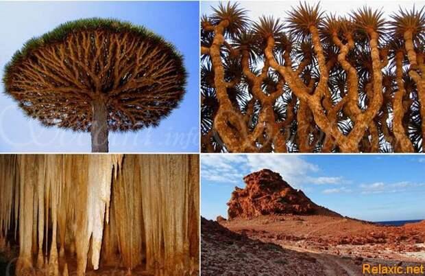 Socotra_002