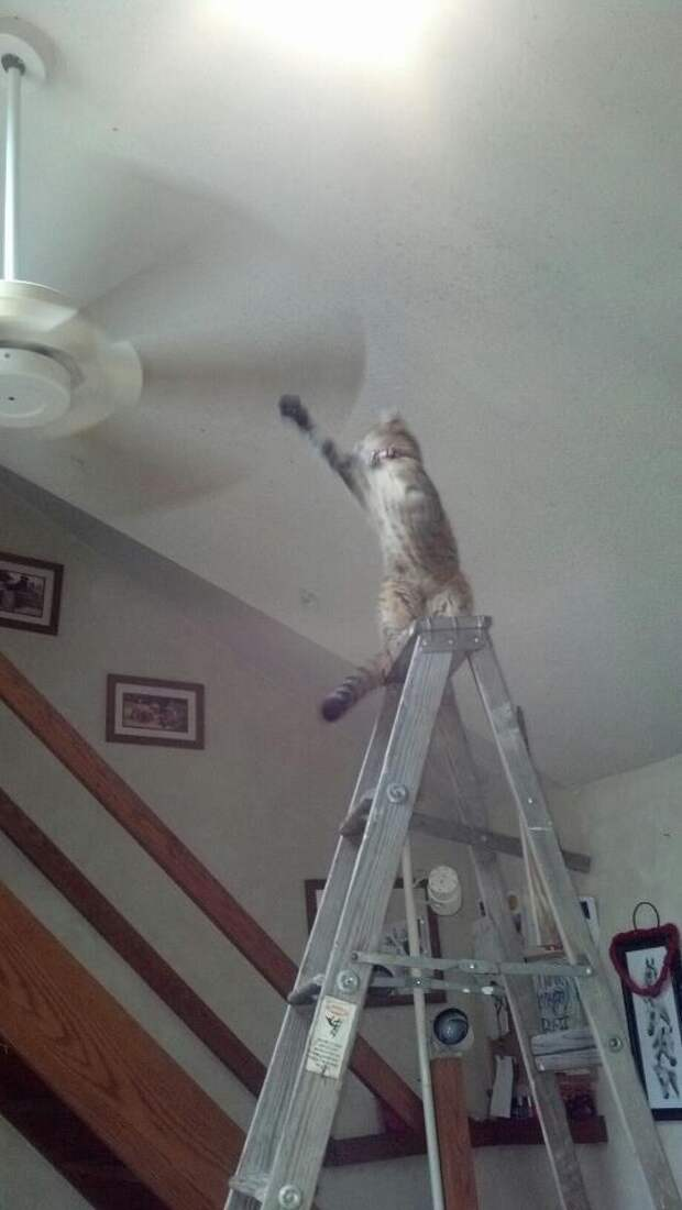 Фото, которые поймут только владельцы котов