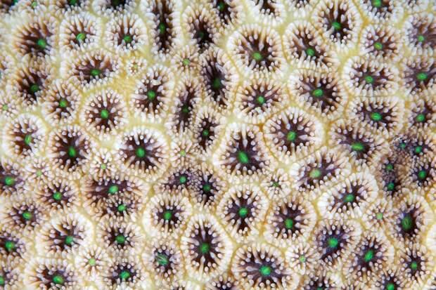 Corals15 Макрофотографии кораллов