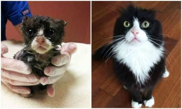 5 кошек после того как приобрели дом! животные, кошки, после того как приобрели дом