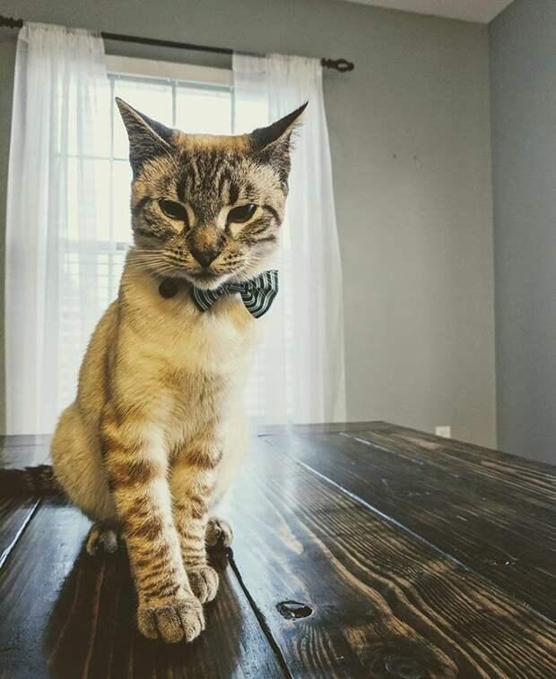 Это Олли, новый член семьи Карлсонов и гордый владелец собственной кровати, сделанной специально для него домашние животные, коты, кровать, мебель для кошек, мебель из дерева, миниатюрная, самоделки, своими руками