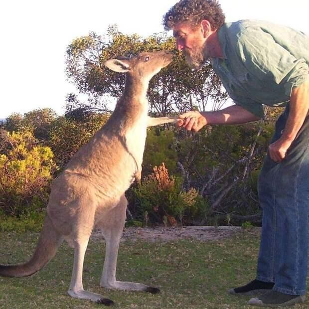 18 фото, которые рассказывают об Австралии больше, чем любой путеводитель