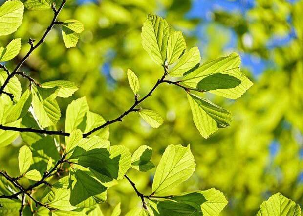 Деревья/Фото: pixabay.com