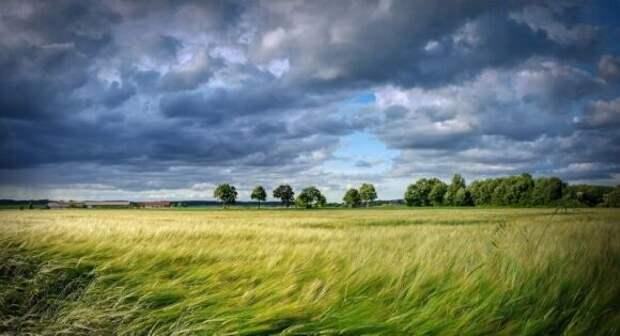 Fruchthandel: Европа терпит убытки из-за сельского хозяйства России