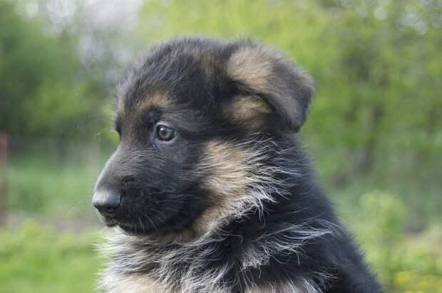 Подростку из Томска, потерявшему собаку в ДТП, подарили щенка