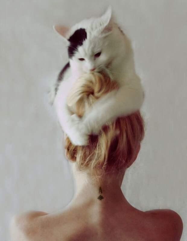 3. Популярность, животные, идея, интернет, кот, фото, шапка
