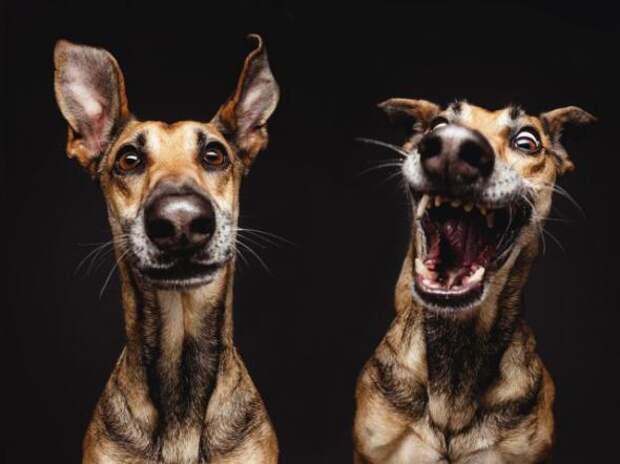 Про собак или почему собака лучший друг человека