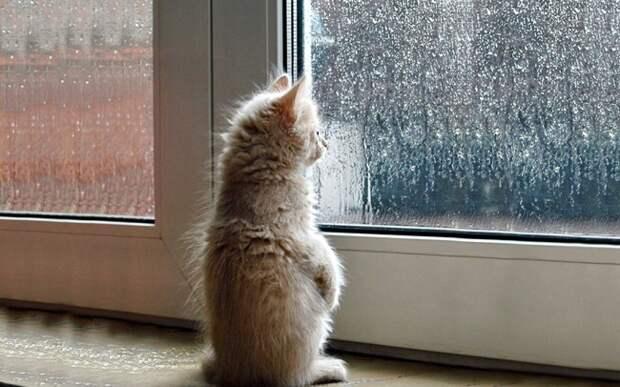 7238110-R3L8T8D-650-cat-waiting-window-69