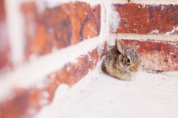 """Поесть и погреться. В """"Мосприроде"""" рассказали, зачем зайцы пришли в жилые дворы"""