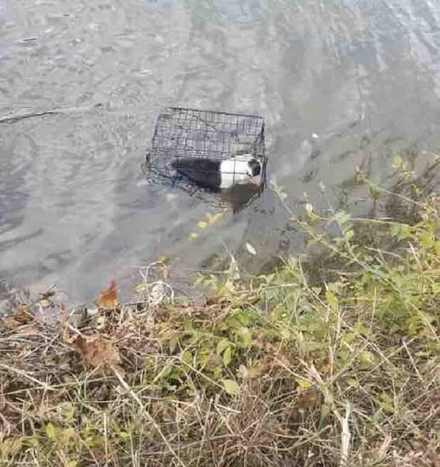 Отправляясь на озеро, мужчина и подумать не мог, что увидит в воде клетку, а в ней – замерзающую собаку