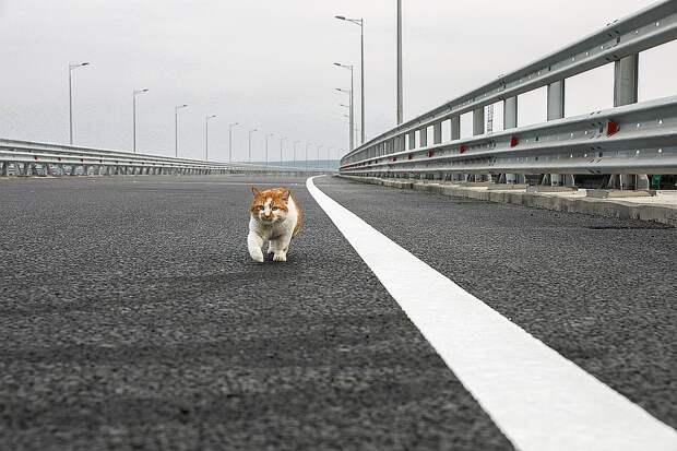 Кот-символ Крымского моста Фото: Facebook кота Мостика