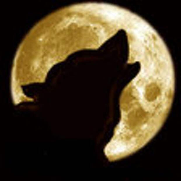 Волк при луне монохром
