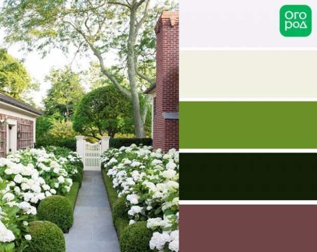 клумба с белыми и зелеными цветами, сад в бело-зеленых цветах