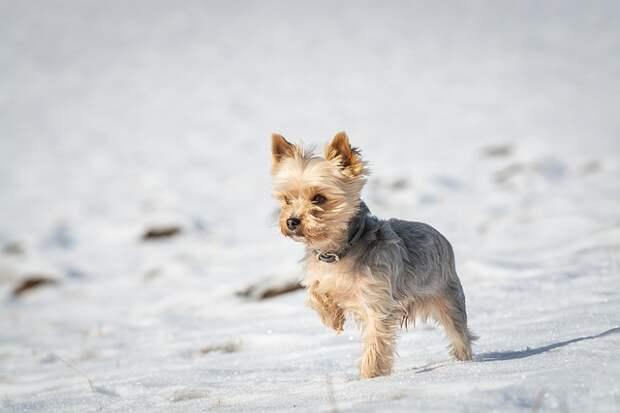 Марьино признали лучшим районом для жизни с собакой