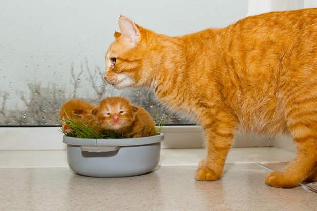 Кошка принесла в больницу заболевших котят