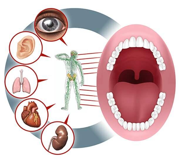 Какая связь между зубами и внутренними органами