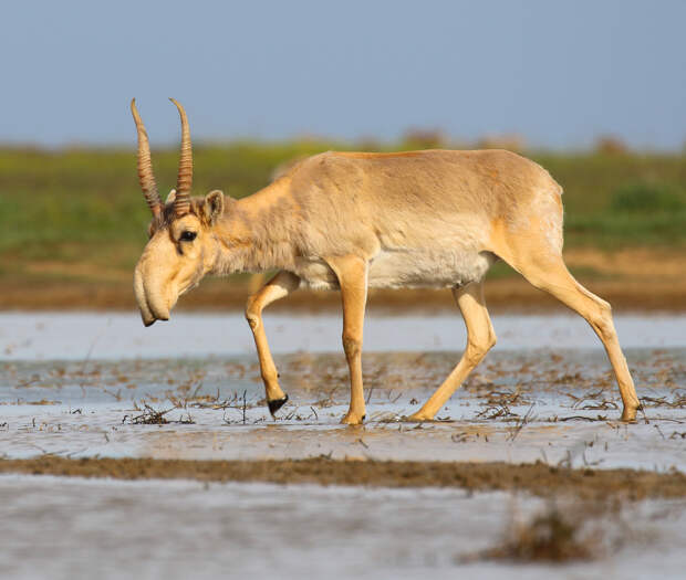 В WWF предрекли исчезновение 6 видов животных в России