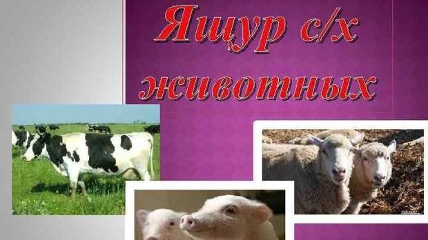 Госкомветеринарии Крыма информирует об опубликовании новых ветеринарных правил, предусматривающие проведение мероприятий по профилактике и ликвидации очагов ящура