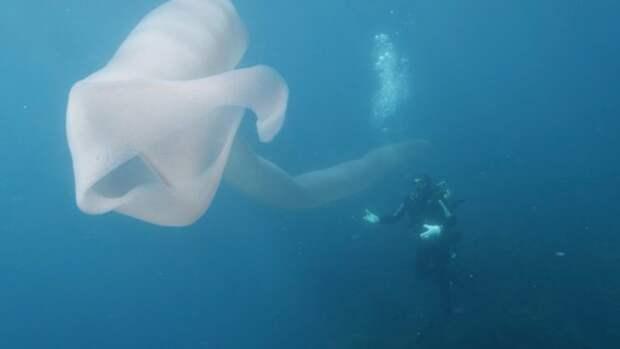 Дайверы сняли на видео необычное морское существо