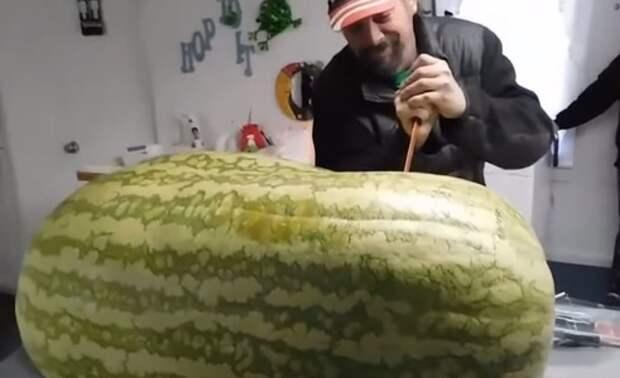 """""""Внутри, наверное, сахарная сочная мякоть"""": в предвкушении эпического момента мужчина разрезал 130-килограммовый арбуз"""