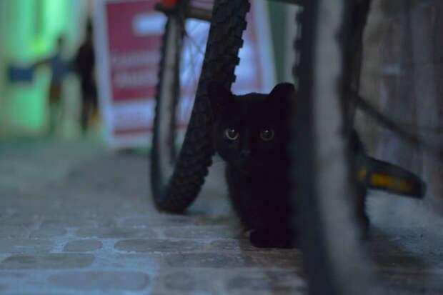 В тени Эс-Сувейра, город, животные, кот, марокко, проект, фотограф