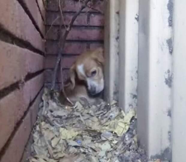 Пес прячется