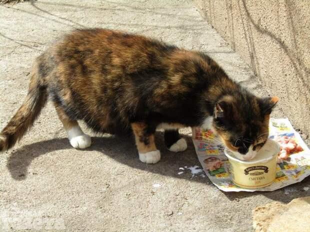 ВБресте вподвале многоэтажки наНабережной уже неделю заперт кот— иникто незнает, что сним делать