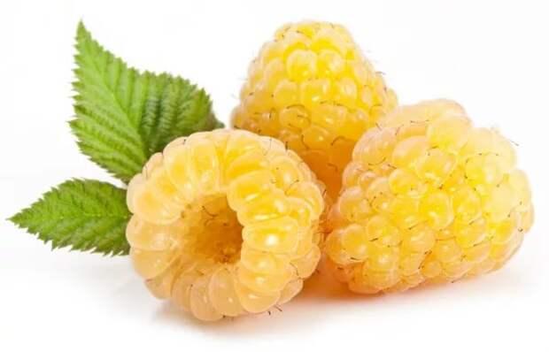 Картинки по запросу желтая малина
