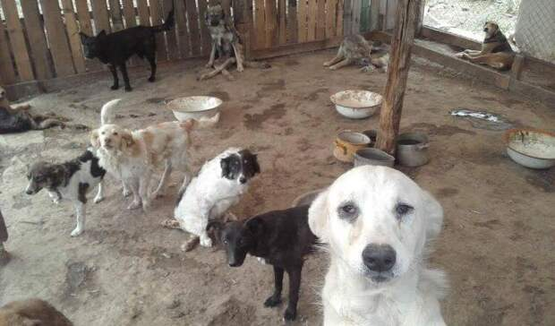 Срочно нужен дом  для собачек-спинальников из Астрахани. Подробности в посте.
