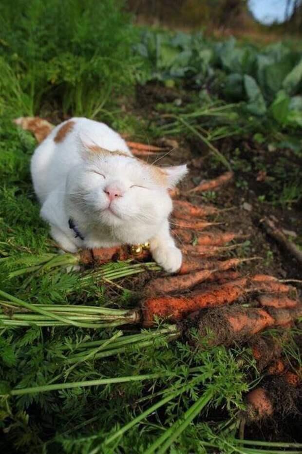 "Дача сад on Twitter: ""когда собрал урожай) #cat #cats #catsagram ..."
