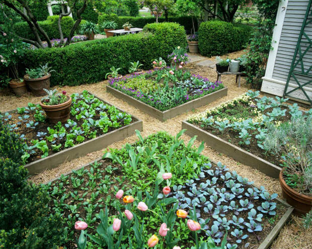 Зонирование огорода квадратными грядками.
