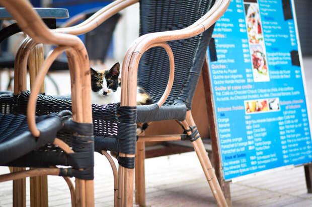 Успел к завтраку Эс-Сувейра, город, животные, кот, марокко, проект, фотограф