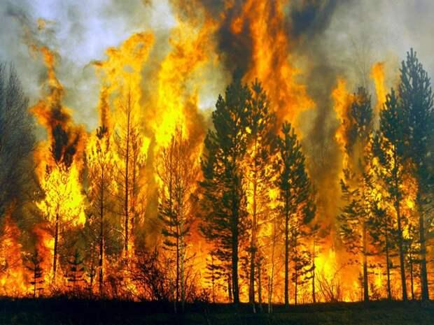 Они ждут внаших лесах: 10 смертельных опасностей для любителей природы
