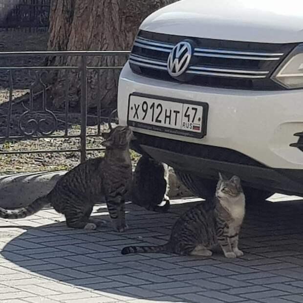 Пойманы на месте преступления. Один снимает номера, двое прикрывают воришки, воруют, животные, звери, птицы