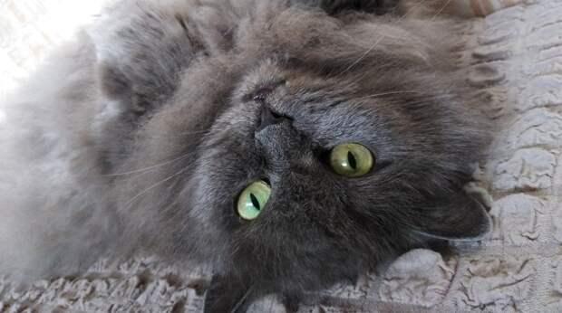 Беременная кошка зашла погреться в подъезд. Её жизнь висела на волоске…