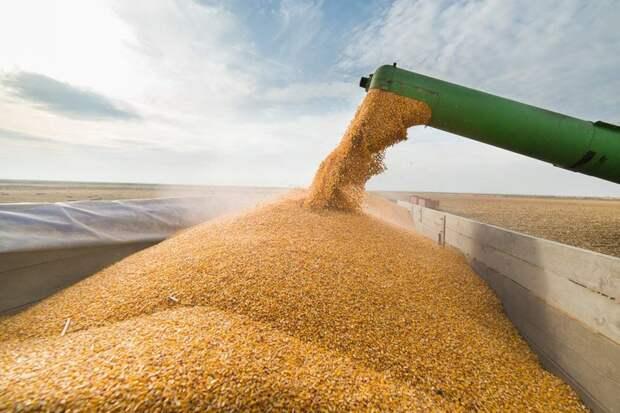 Благодаря антироссийским санкциям Россия завалила Латвию зерном