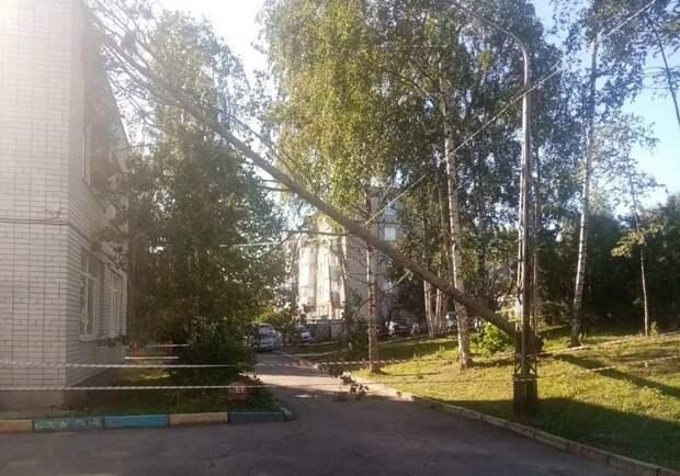 В Петрозаводске сильный ветер повалил дерево на здание садика